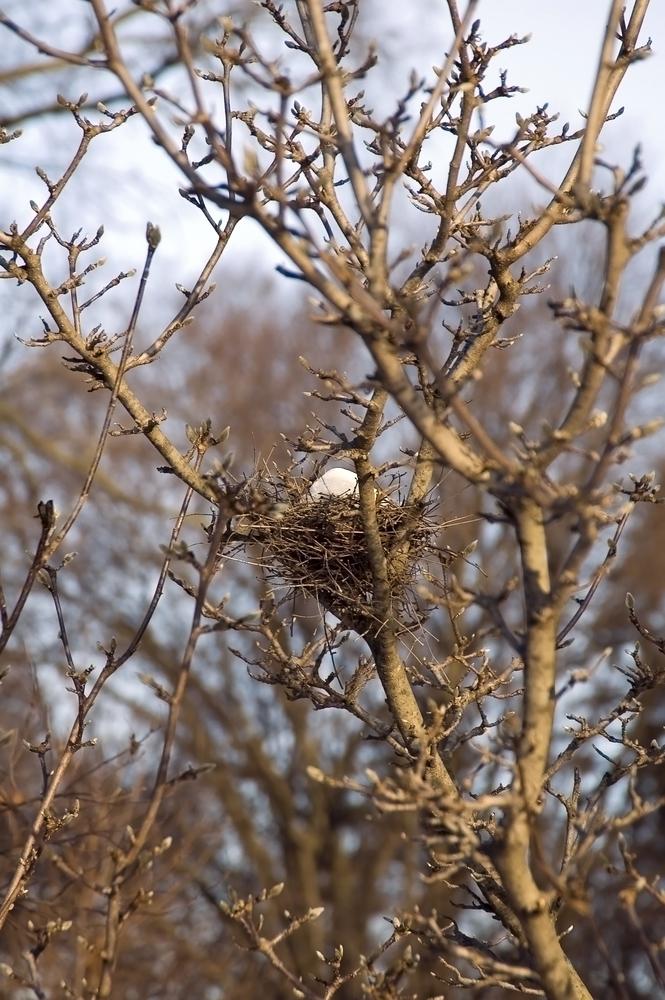 Snow in bird's nest